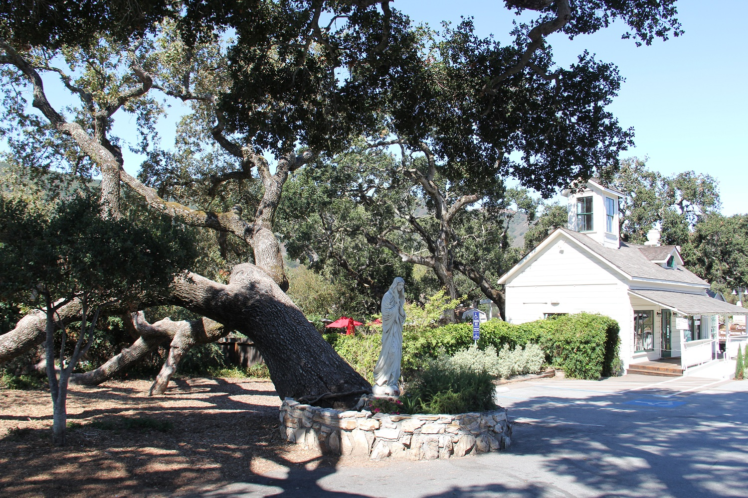 08_Great_Carmel_Valley_Oaks